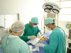 Nucleo Hospitalar Veterinario Moura Lacerda (1)